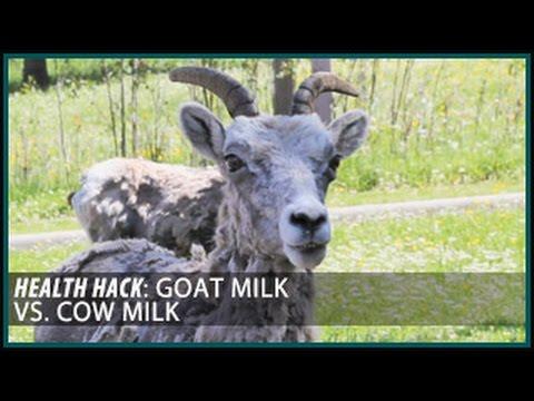 Goat Milk vs. Cow Milk: Health Hacks- Thomas DeLauer